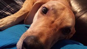 dog-closeup-affordable-pet-hospital-tampa