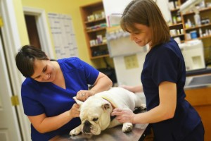 katie-kate-affordable-pet-hospital