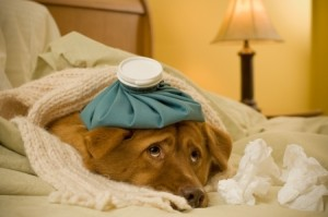 dog sick
