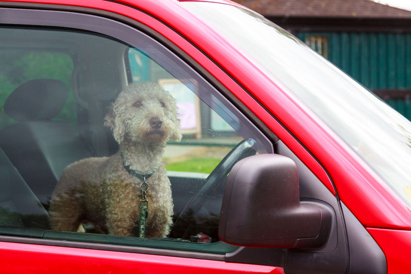 Everything You Should Know About Pets and Car Safety -